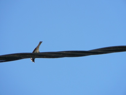 Bird on the wire.jpg